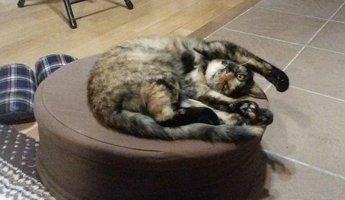 2代目のネコ